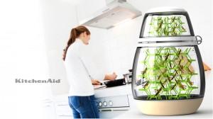 Lepsis-KitchenAid-Sprinkhanen-kweken