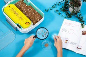 Hive Explorer - de mini meelwormenkwekerij