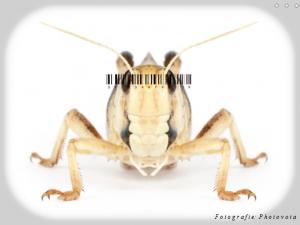 Entomofagie tot kunst verheven met foto's