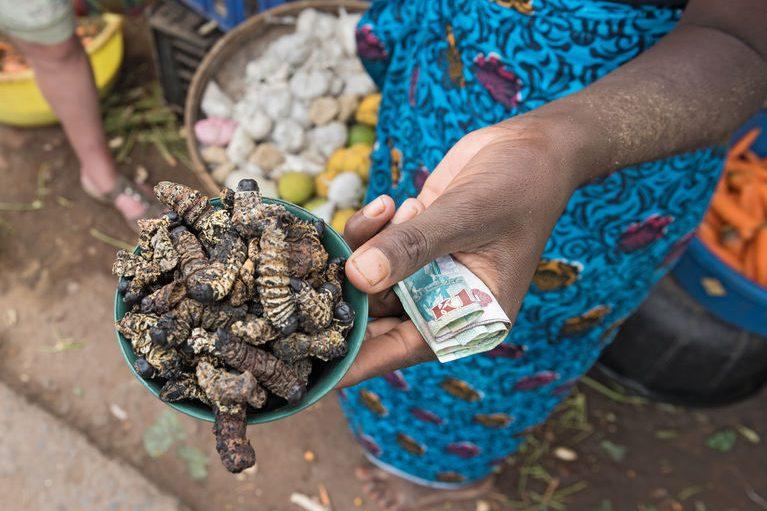 Vrouw verkoopt Mopane rupsen