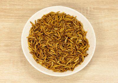 Meelwormen zijn goedgekeurd voor humane voeding!