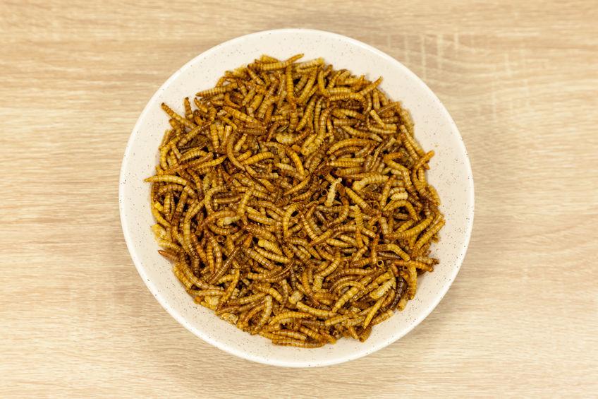 Bord met meelwormen
